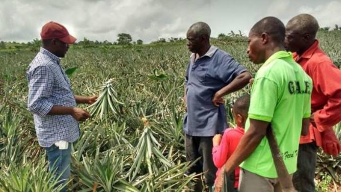 Die DEG unterstützt ein Vorhaben des Schweizer Unternehmens HPW AG mit dem Ziel, den nachhaltigen Bio-Anbau sowie die Weiterverarbeitung tropischer Früchte zu fördern.