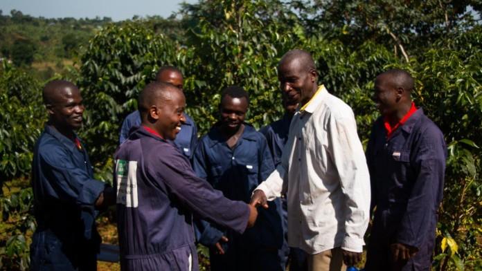 Kyagalanyi Coffee, Uganda, Afrika, Kaffee, Landwirtschaft