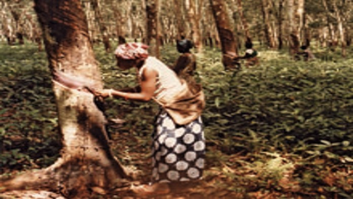 An African woman working in agriculture